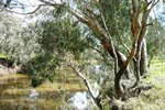 barwon_river_west_reserve.jpg