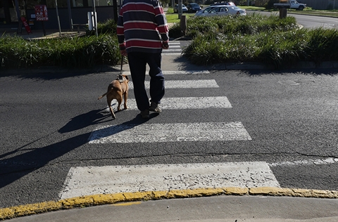 Man and dog crossing road