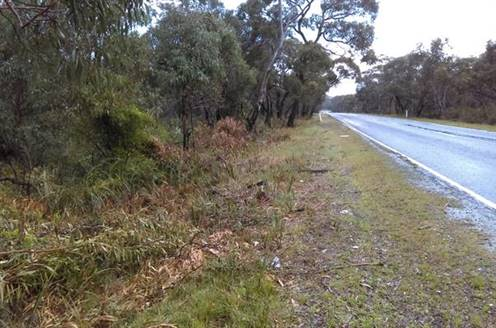 Side of the road showing bushes, lawn and road.